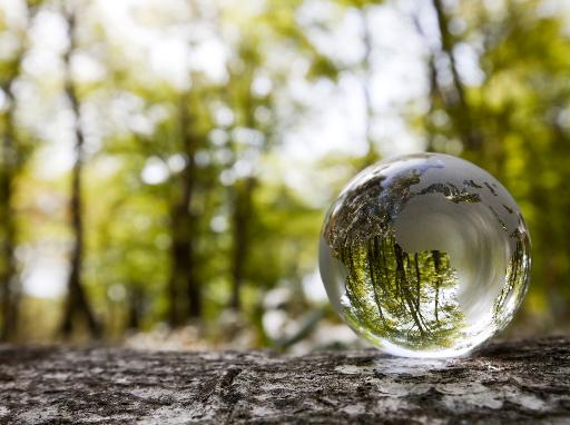 Glas-Weltkugel im Wald.